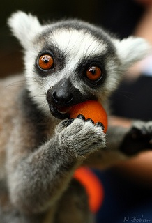 crazy eyes lemur flex for me soulful mess